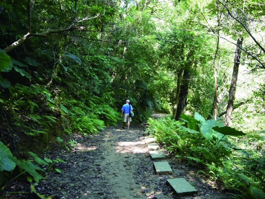 鳶山步道林木茂盛